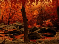 Small screenshot 2 of 3D Autumn Woods