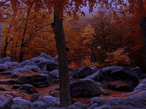 Small screenshot 3 of 3D Autumn Woods