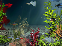 Screenshot of Aqua Coral Reefs 3D