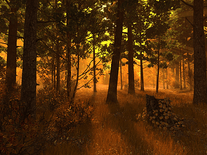 Small screenshot 3 of Autumn Forest 3D