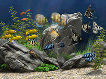 Screenshot of Dream Aquarium