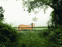 Screenshot of Horse in the Mist