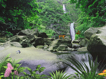 Screenshot of Jungle Waterfall