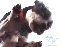 Screenshot of Must Love Dogs #1