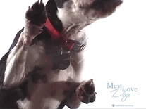 Small screenshot 2 of Must Love Dogs #1