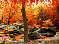 Screenshot of 3D Autumn Woods