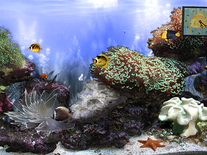 Screenshot of Anemone's Reef
