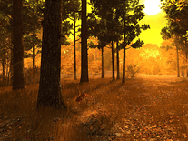 Screenshot of Autumn Forest 3D