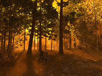 Small screenshot 2 of Autumn Forest 3D