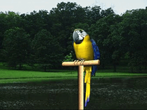 Screenshot of Digital Talking Parrot