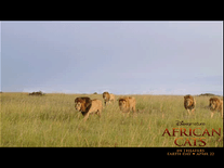 Small screenshot 3 of Disney Nature: African Cats