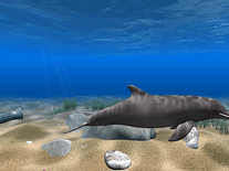 3d Dolphin Screensaver - Free downloads and reviews - CNET ...