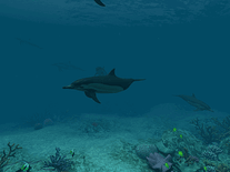 Screenshot of Dolphins 3D