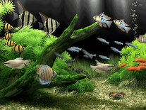 Small screenshot 3 of Dream Aquarium