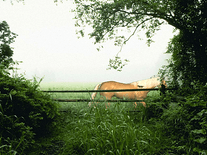 Small screenshot 2 of Horse in the Mist