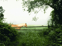 Small screenshot 3 of Horse in the Mist