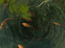 Screenshot of Koi Fish 3D