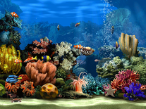 Screenshot of Living Marine Aquarium 2