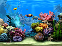Small screenshot 3 of Living Marine Aquarium 2
