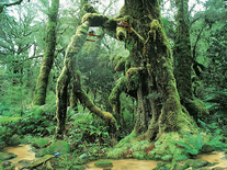 Screenshot of Living Rainforest