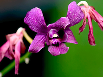 Small screenshot 1 of Orchids