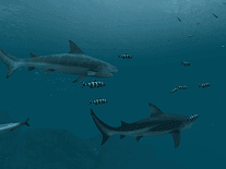 Screenshot of Sharks 3D