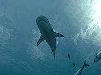 Small screenshot 2 of Sharks 3D