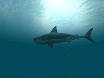 Screenshot of Sharks: Great White 3D