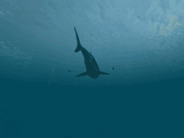 Small screenshot 2 of Sharks: Great White 3D