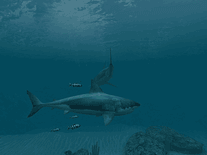 Small screenshot 3 of Sharks: Great White 3D