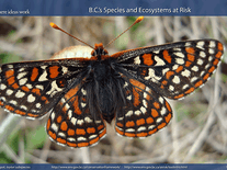 Screenshot of Species At Risk