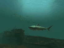 Screenshot of Tiger Sharks 3D