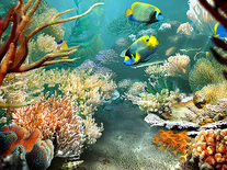 Screenshot of Tropical Fish 3D