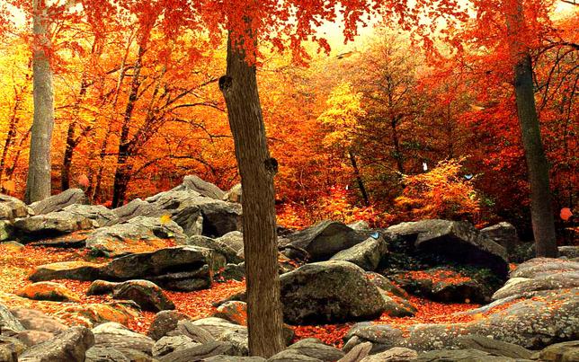 3d autumn woods screensaver for windows screensavers planet