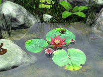 Screenshot of Water Lily