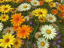 Small screenshot 2 of Wildflowers 3D